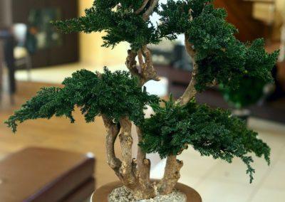 Bonsai trær