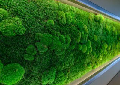 Mose og plantevegger