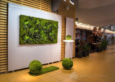 Mosebilder og plantekar